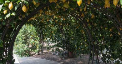 Giardino degli agrumi Pescia